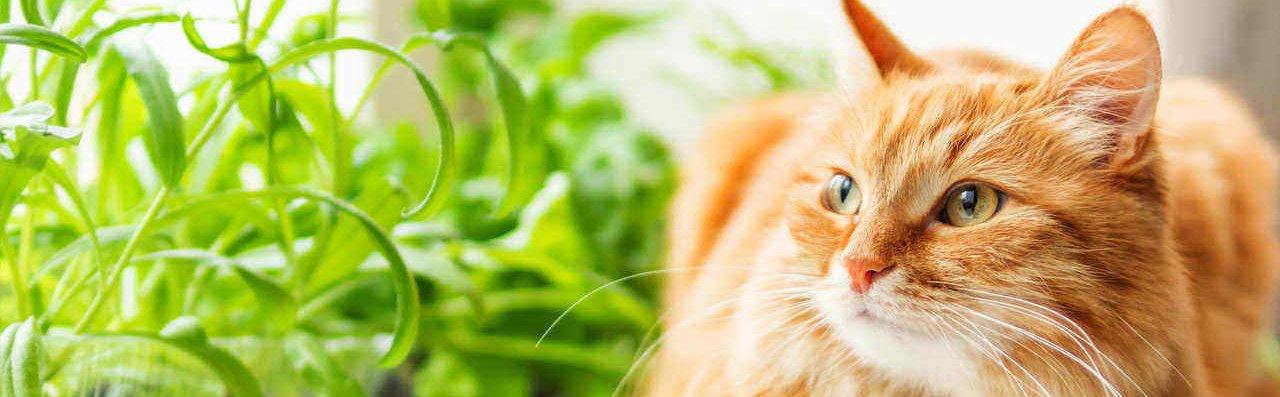 Lemmikloomasõbralikud taimed