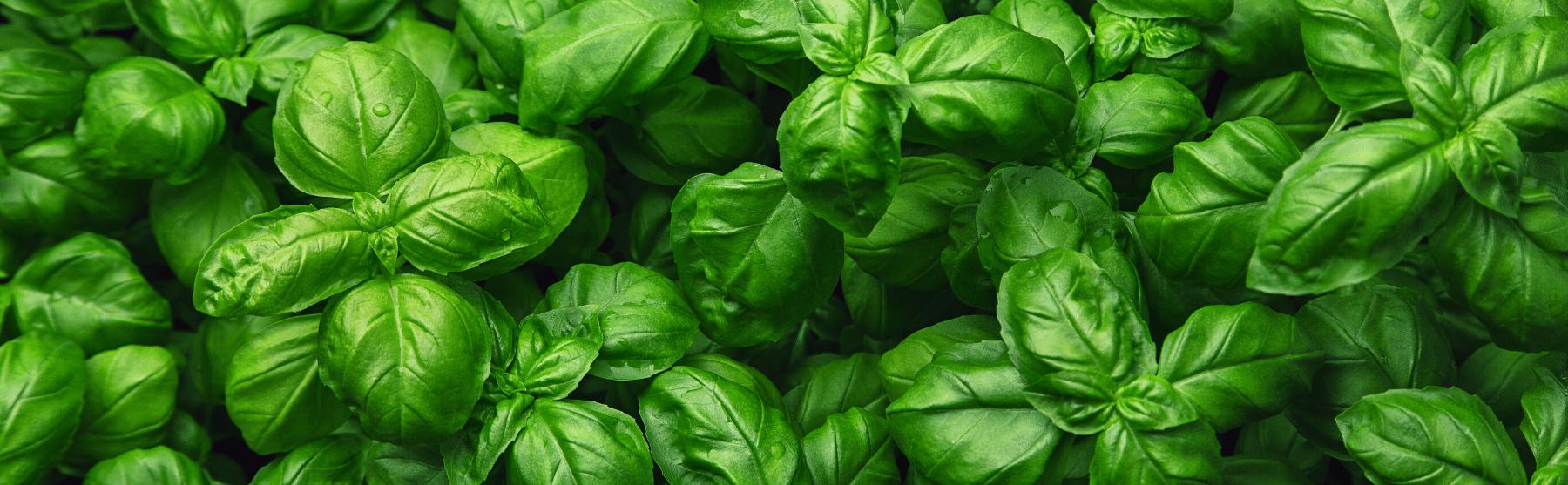 Köögivilja- ja maitsetaimed