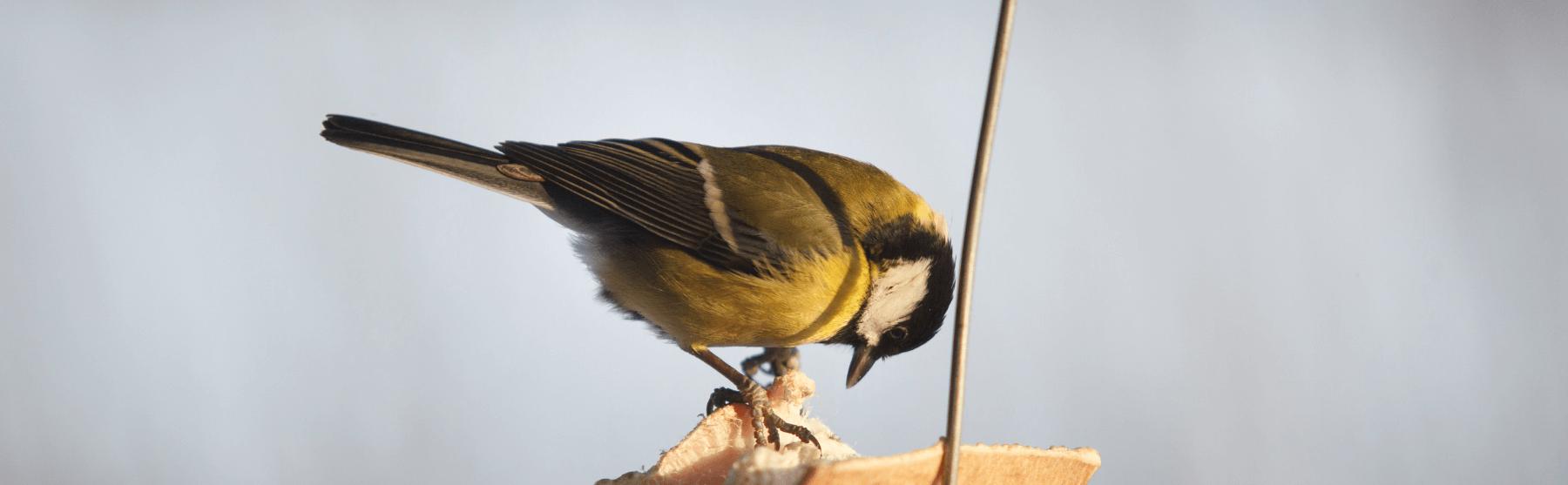 Lindude toitmine