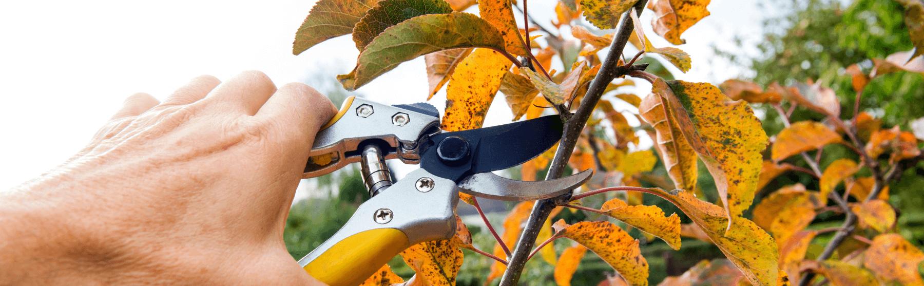 Puude ja põõsaste lõikamine