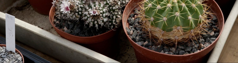 Kergkruusad istutamiseks1