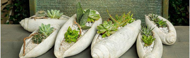 Kuidas äratada kaktusi talveunest?