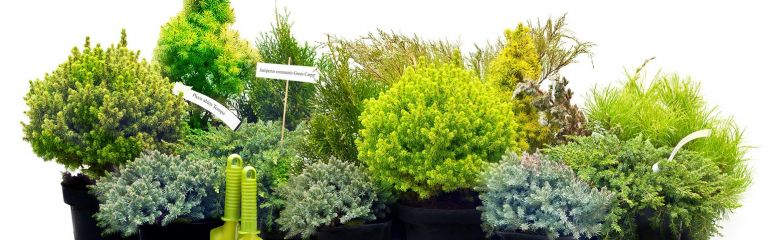 Taimede kaitsmine kevadise päikesepõletuse eest