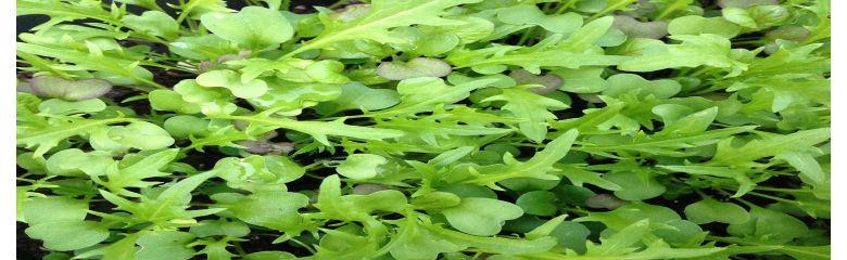 Kasvata ise seemnest võrsed!