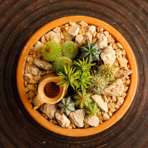 Lilleseade '6 kaktust' savipotis d21cm