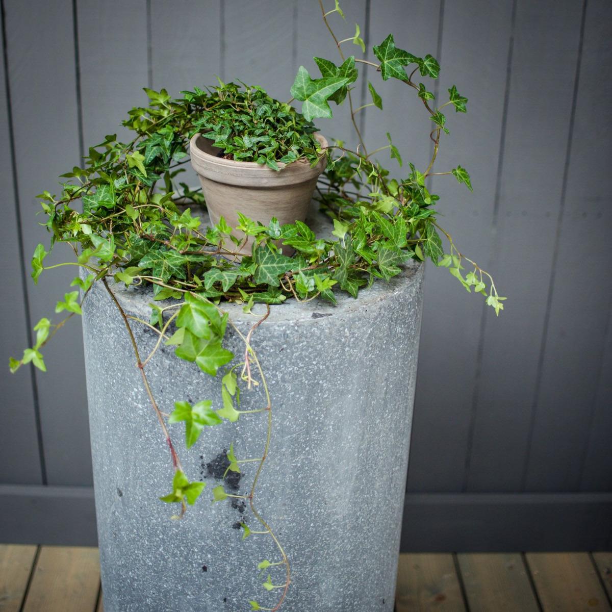 fdfeb3ab534 Millised taimed sobivad õhupuhastajateks?